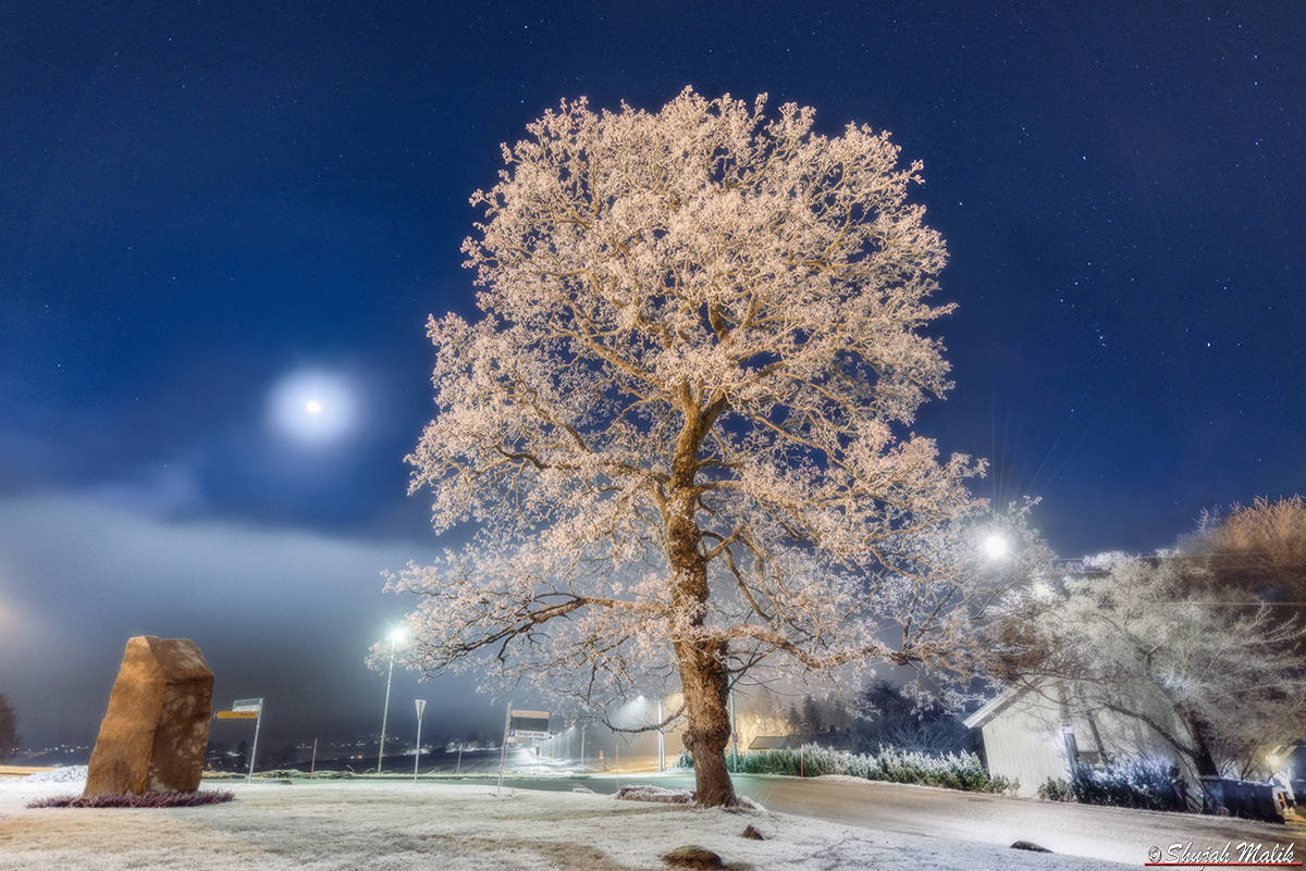 Skoger Tre i frost (fb)